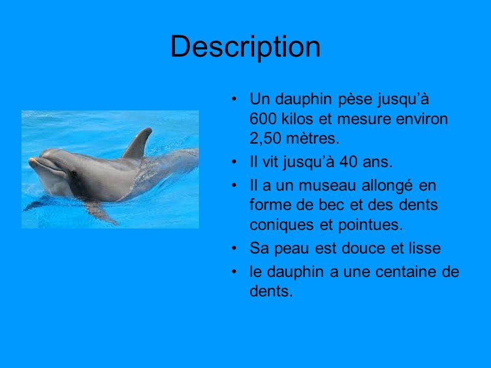 Description Un dauphin pèse jusquà 600 kilos et mesure environ 2,50 mètres. Il vit jusquà 40 ans. Il a un museau allongé en forme de bec et des dents