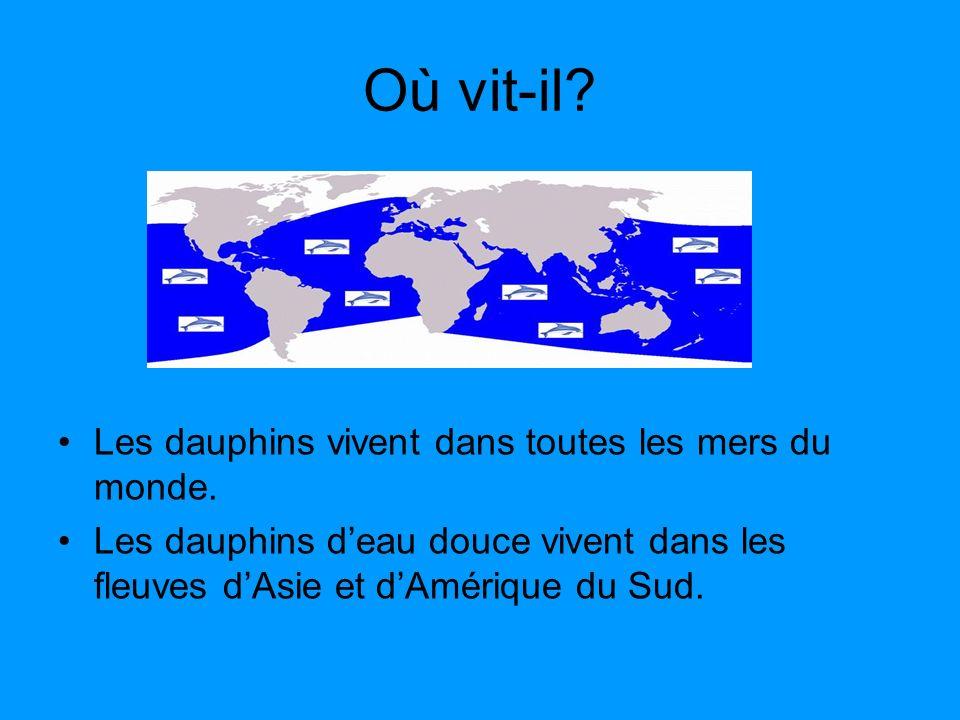 Où vit-il? Les dauphins vivent dans toutes les mers du monde. Les dauphins deau douce vivent dans les fleuves dAsie et dAmérique du Sud.