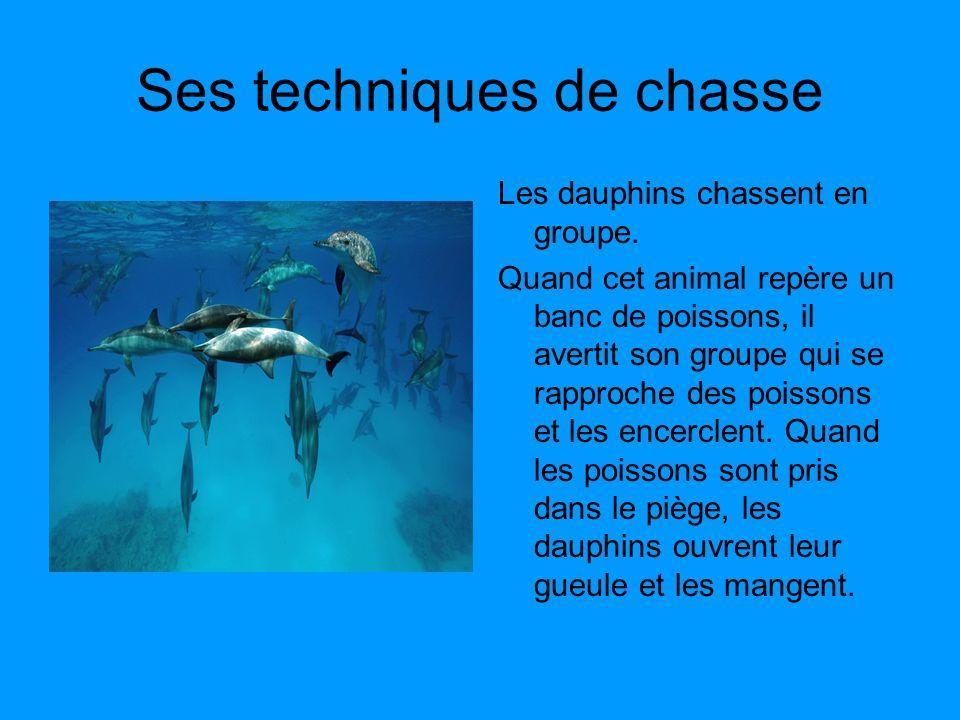 Ses techniques de chasse Les dauphins chassent en groupe. Quand cet animal repère un banc de poissons, il avertit son groupe qui se rapproche des pois