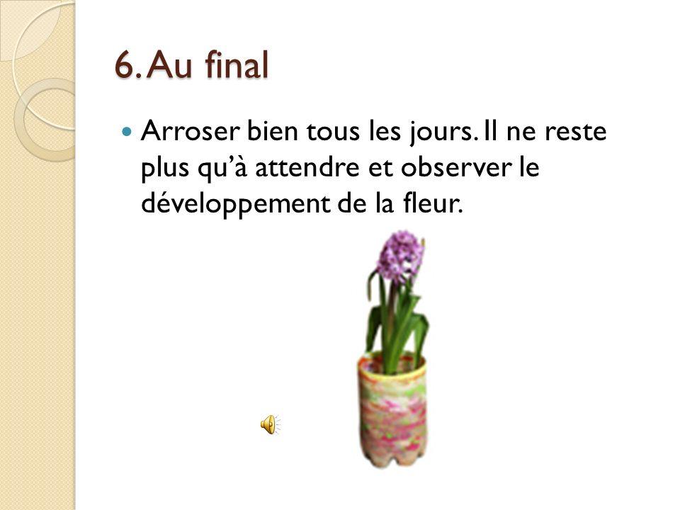 5. Planter loignon de jacinthe Faire un trou au milieu de la terre et déposer loignon de jacinthe. Ajouter de leau pour que les racines soient recouve