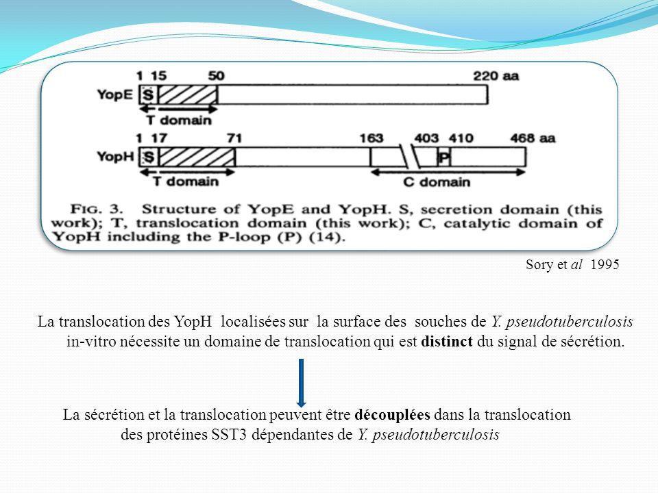Sory et al 1995 La translocation des YopH localisées sur la surface des souches de Y. pseudotuberculosis in-vitro nécessite un domaine de translocatio