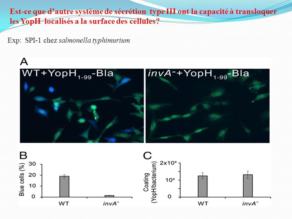 Est-ce que dautre système de sécrétion type III ont la capacité à transloquer les YopH localisés a la surface des cellules? Exp: SPI-1 chez salmonella