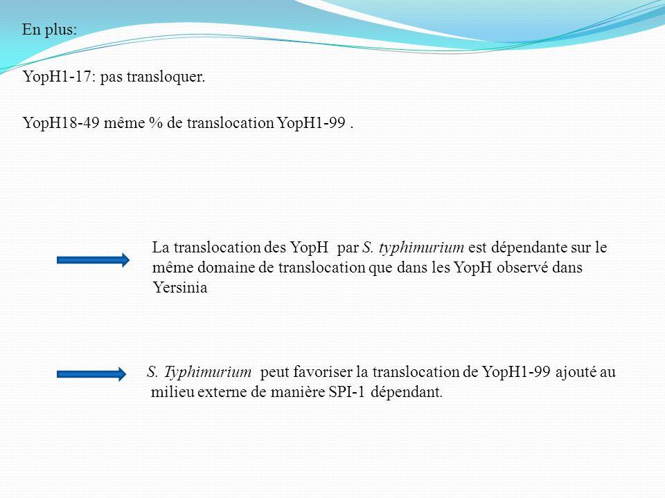 YopH1-17: pas transloquer. YopH18-49 même % de translocation YopH1-99. La translocation des YopH par S. typhimurium est dépendante sur le même domaine