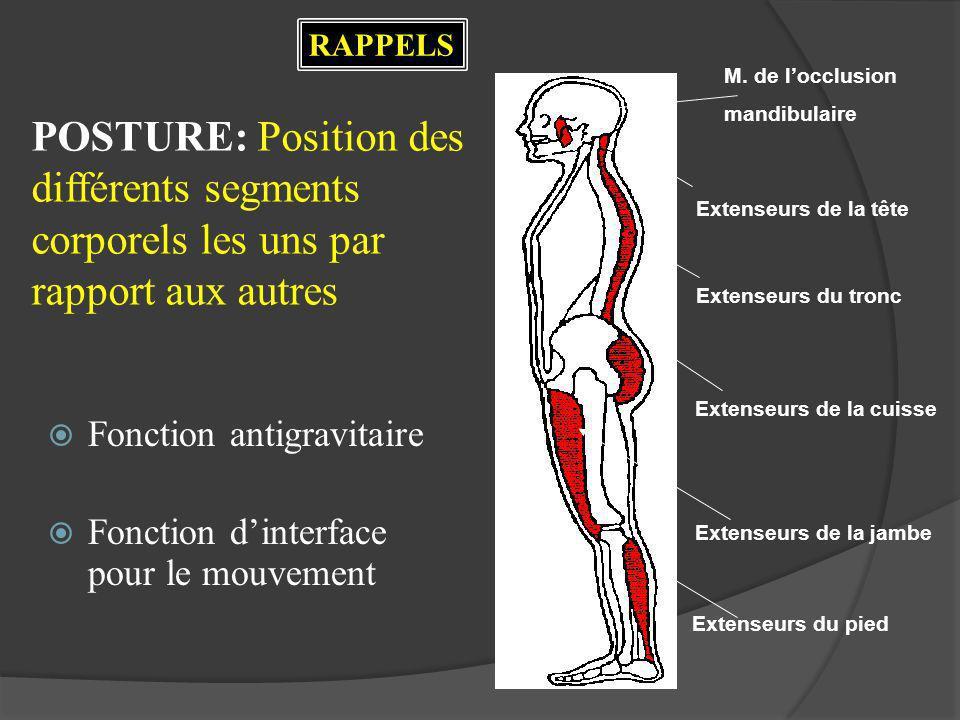 POSTURE: Position des différents segments corporels les uns par rapport aux autres Fonction antigravitaire Fonction dinterface pour le mouvement Exten