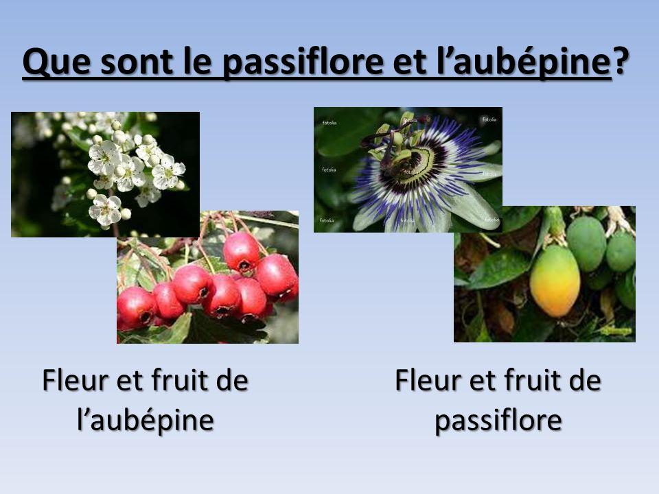 Que sont le passiflore et laubépine? Fleur et fruit de laubépine Fleur et fruit de passiflore