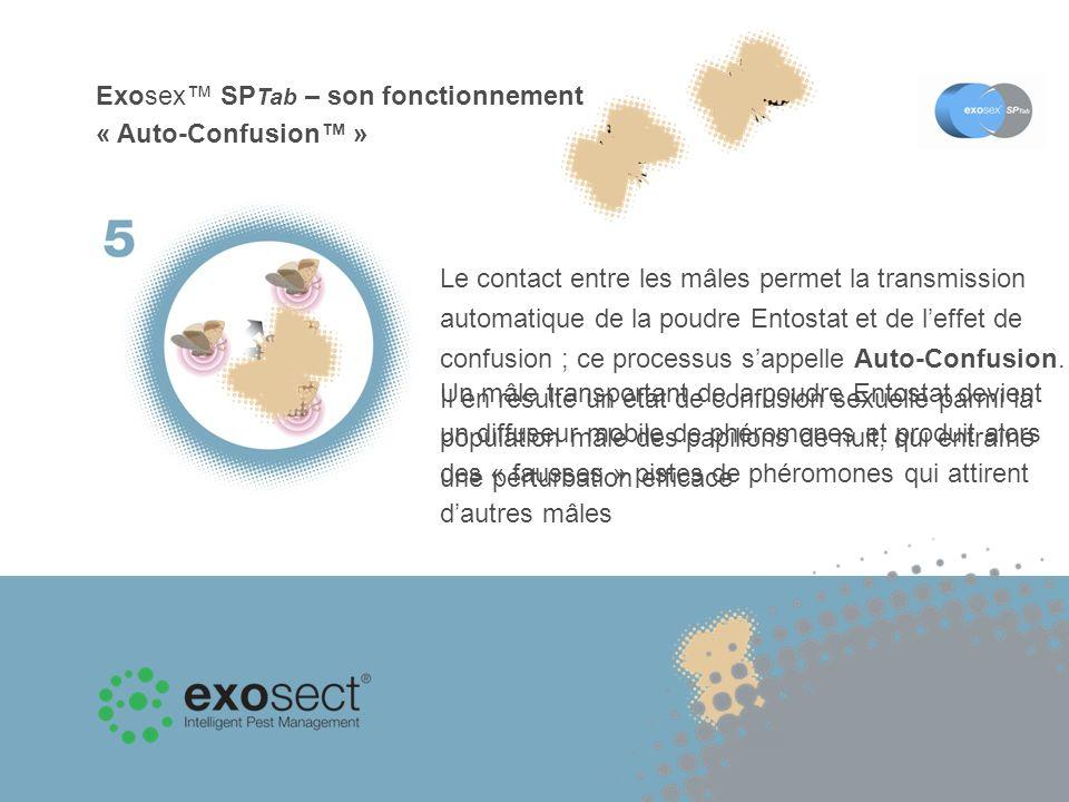 Exosex SP Tab – son fonctionnement « Auto-Confusion » Un mâle transportant de la poudre Entostat devient un diffuseur mobile de phéromones et produit