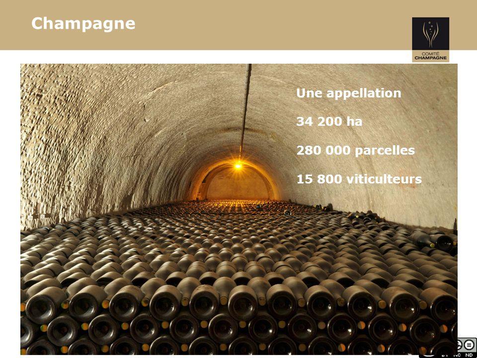 13 Groupe de concertation technique Les partenaires du développement « Officiels » Organismes de conseils Enseignement et formation Maison de Champagne Coopératives 50 techniciens