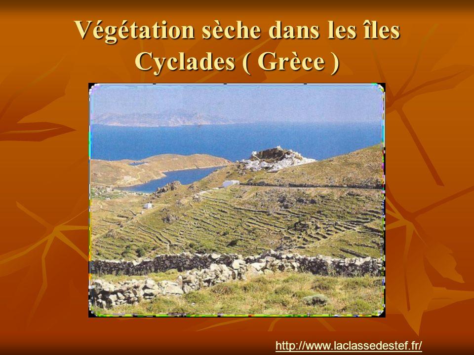 Végétation sèche dans les îles Cyclades ( Grèce ) http://www.laclassedestef.fr/ http://www.laclassedestef.fr/ Auteur : Nathalie