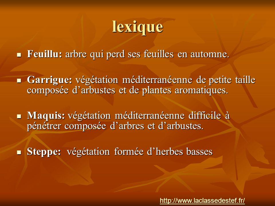 lexique Feuillu: arbre qui perd ses feuilles en automne.