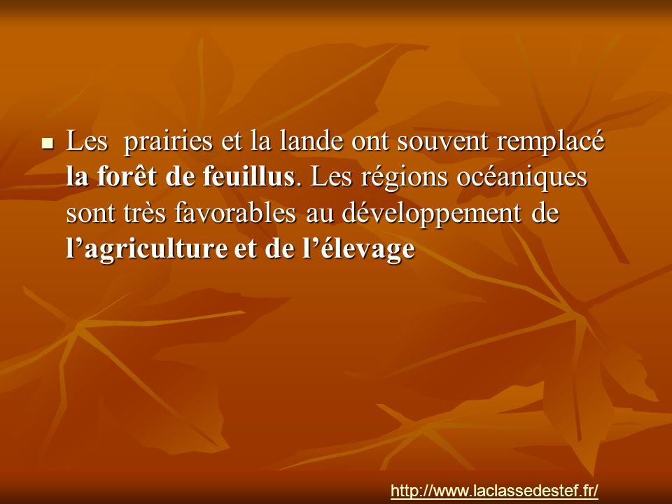 Les prairies et la lande ont souvent remplacé la forêt de feuillus. Les régions océaniques sont très favorables au développement de lagriculture et de