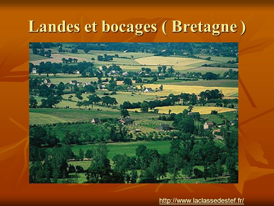 Landes et bocages ( Bretagne ) http://www.laclassedestef.fr/ http://www.laclassedestef.fr/ Auteur : Nathalie