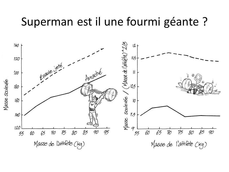 Superman est il une fourmi géante ?