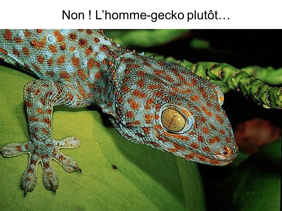 Non ! Lhomme-gecko plutôt…