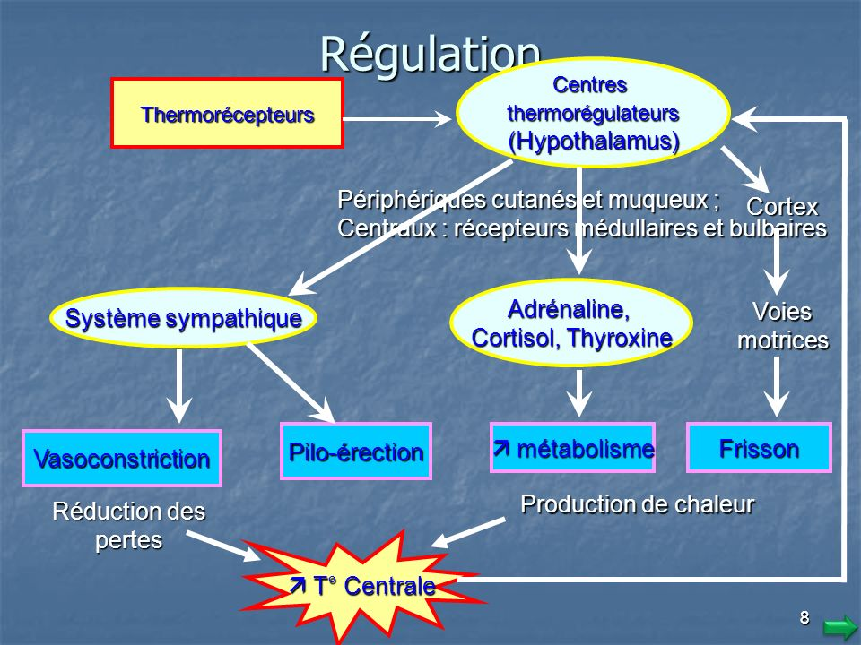7 4. Causes et Mécanismes Régulation thermique (thermogenèse) Régulation thermique (thermogenèse) Le contrôle de la thermorégulation est assuré par le