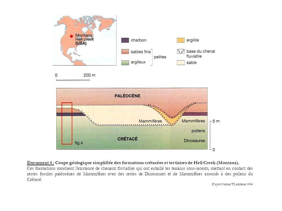 Document 4 : Coupe géologique simplifiée des formations crétacées et tertiaires de Hell Creek (Montana). Ces formations montrent l'existence de chenau