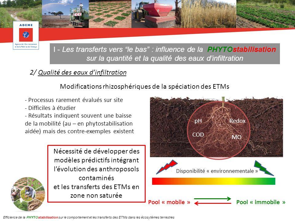 II - Les transferts latéraux : influence de la PHYTOstabilisation sur les transferts particulaires 1/ Transferts par les eaux de ruissellement Exemple du site de Salsigne : comparaison des concentrations en As particulaire dans les eaux de ruissellement collectées entre 2007 et 2010 sur 2 zones diversement végétalisées 20082010 ZE2 : très faible développement du couvert végétal (8% de recouvrement en 2010) 20082010 ZE3 : développement moyen du couvert végétal (30% de recouvrement en 2010) Pas de diminution de lentrainement Diminution significative de lentrainement Efficience de la PHYTOstabilisation sur le comportement et les transferts des ETMs dans les écosytèmes terrestres