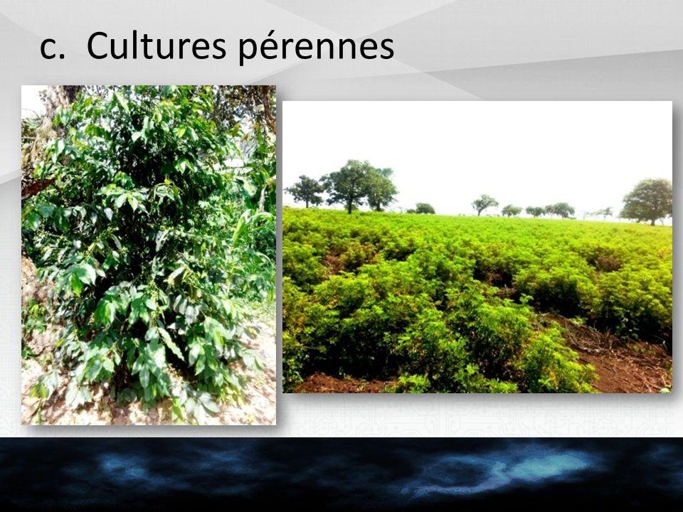 c. Cultures pérennes