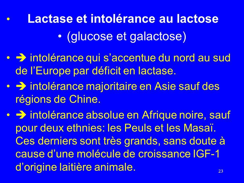 Lactase et intolérance au lactose (glucose et galactose) intolérance qui saccentue du nord au sud de lEurope par déficit en lactase. intolérance major