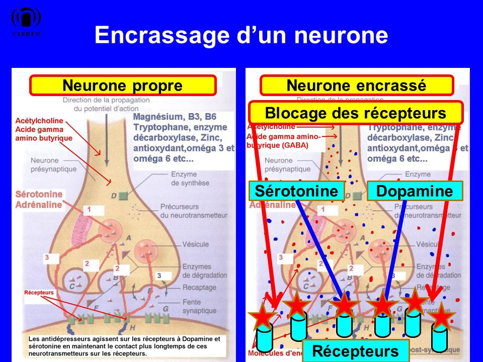 Encrassage dun neurone 45 Neurone propreNeurone encrassé Blocage des récepteurs Récepteurs SérotonineDopamine