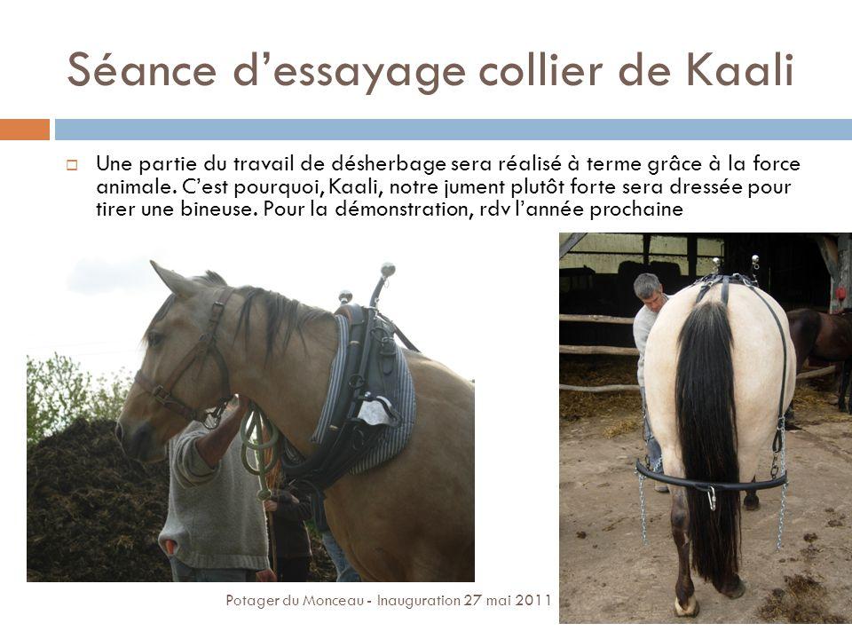 Séance dessayage collier de Kaali Une partie du travail de désherbage sera réalisé à terme grâce à la force animale. Cest pourquoi, Kaali, notre jumen