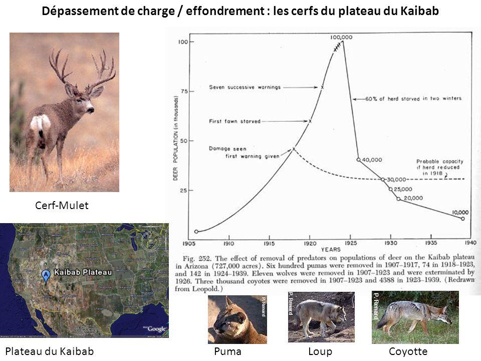 Dépassement de charge / effondrement : les cerfs du plateau du Kaibab Cerf-Mulet Plateau du KaibabCoyotteLoupPuma