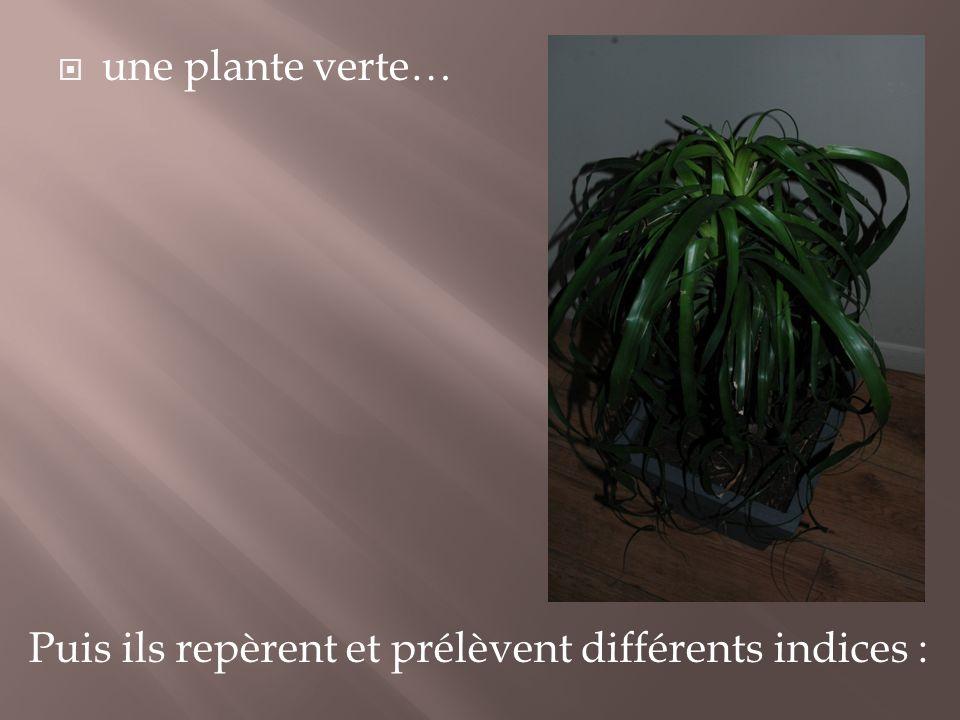 une plante verte… Puis ils repèrent et prélèvent différents indices :