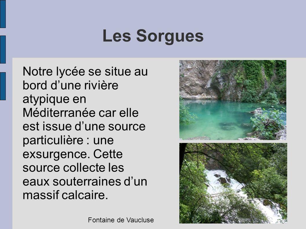 Les Sorgues Notre lycée se situe au bord dune rivière atypique en Méditerranée car elle est issue dune source particulière : une exsurgence. Cette sou