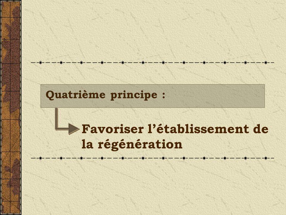 Favoriser létablissement de la régénération Quatrième principe :