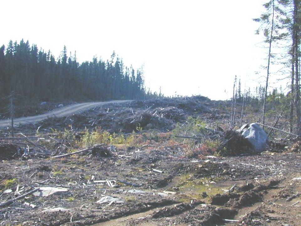 Garder plus de forêt que de coupes dans le moyen-plan Deuxième principe :