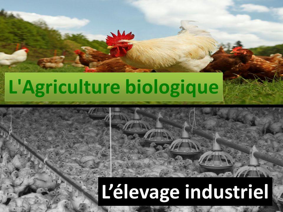 L'Agriculture biologique Lélevage industriel