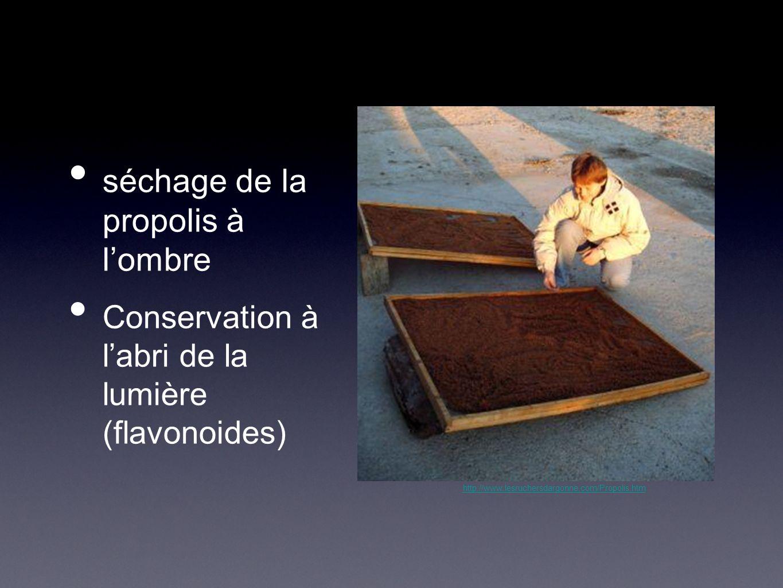 séchage de la propolis à lombre Conservation à labri de la lumière (flavonoides) http://www.lesruchersdargonne.com/Propolis.htm