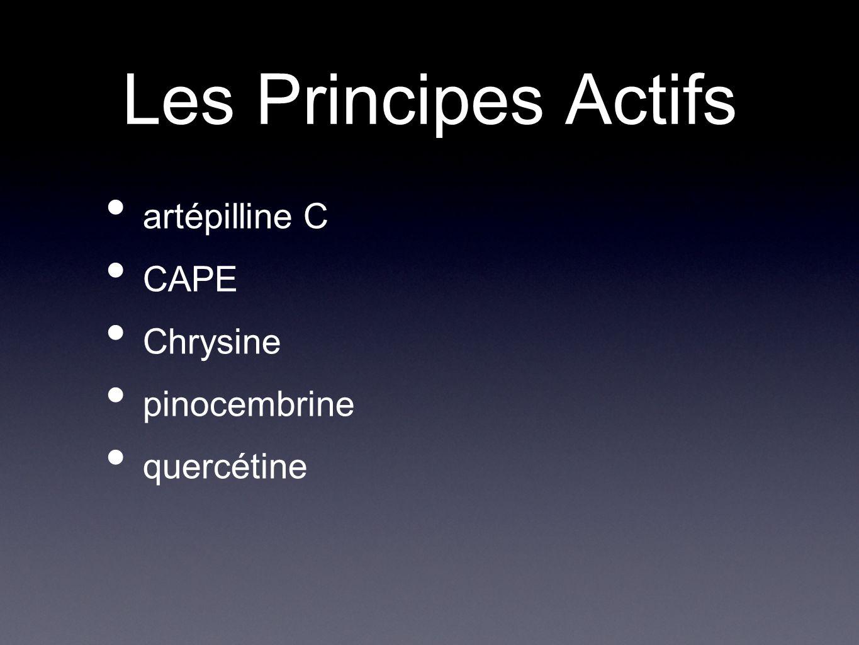 Les Principes Actifs artépilline C CAPE Chrysine pinocembrine quercétine