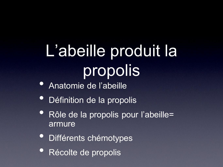 Labeille produit la propolis Anatomie de labeille Définition de la propolis Rôle de la propolis pour labeille= armure Différents chémotypes Récolte de propolis