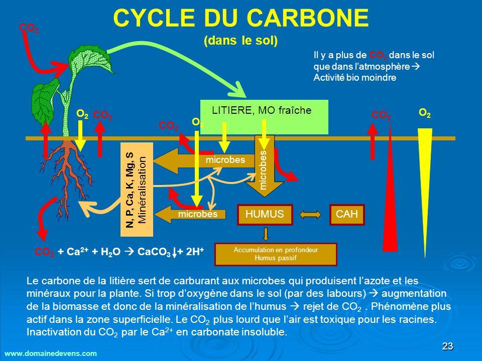 23 CYCLE DU CARBONE (dans le sol) Le carbone de la litière sert de carburant aux microbes qui produisent lazote et les minéraux pour la plante.