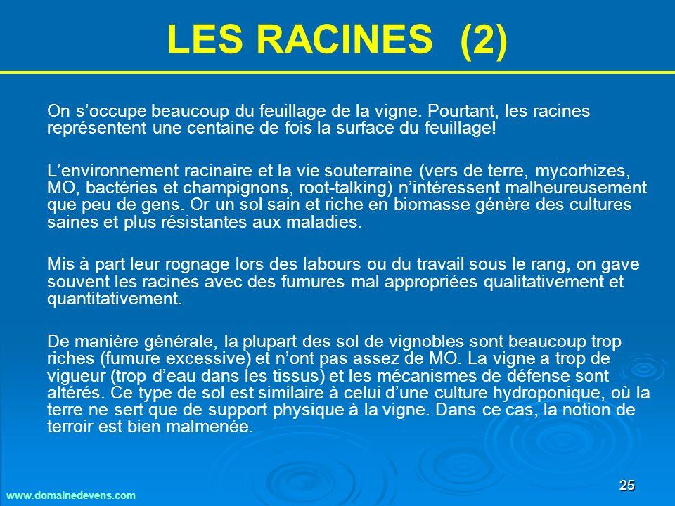 25 LES RACINES (2) On soccupe beaucoup du feuillage de la vigne.