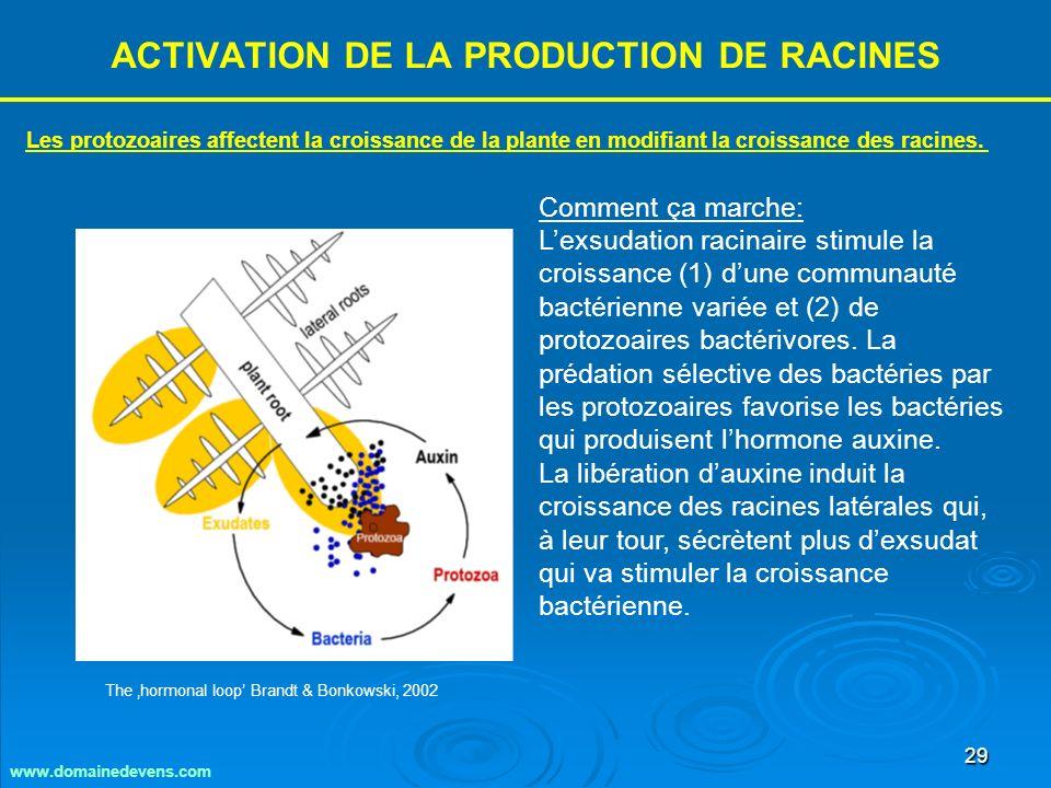 29 ACTIVATION DE LA PRODUCTION DE RACINES Comment ça marche: Lexsudation racinaire stimule la croissance (1) dune communauté bactérienne variée et (2) de protozoaires bactérivores.