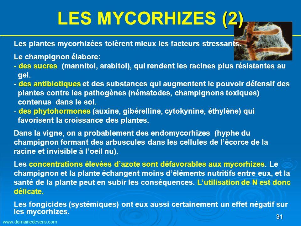 31 Les plantes mycorhizées tolèrent mieux les facteurs stressants.