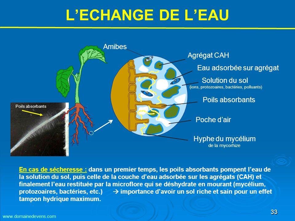 33 Solution du sol (ions, protozoaires, bactéries, polluants) LECHANGE DE LEAU Agrégat CAH Eau adsorbée sur agrégat Poils absorbants Poche dair Hyphe du mycélium de la mycorhize En cas de sécheresse : dans un premier temps, les poils absorbants pompent leau de la solution du sol, puis celle de la couche deau adsorbée sur les agrégats (CAH) et finalement leau restituée par la microflore qui se déshydrate en mourant (mycélium, protozoaires, bactéries, etc.) importance davoir un sol riche et sain pour un effet tampon hydrique maximum.