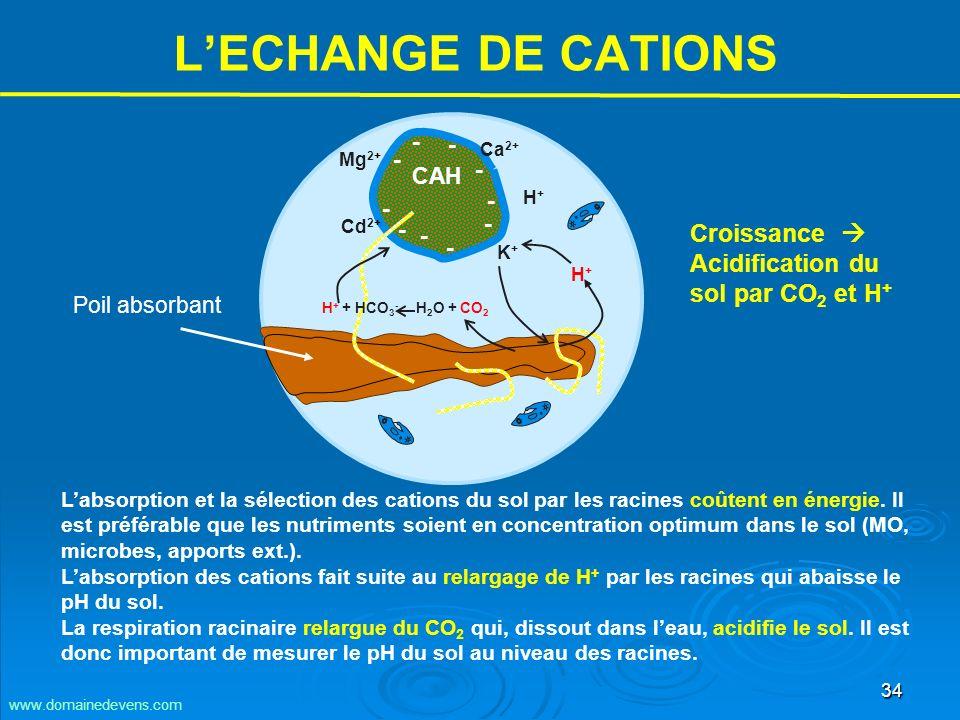 34 LECHANGE DE CATIONS Labsorption et la sélection des cations du sol par les racines coûtent en énergie.