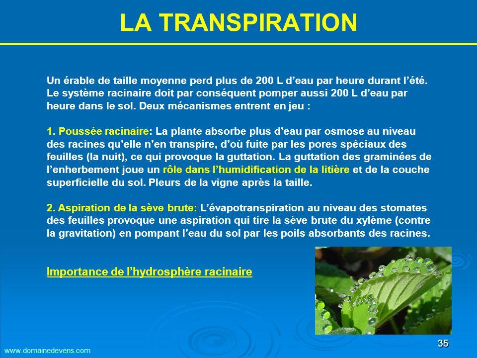 35 LA TRANSPIRATION Un érable de taille moyenne perd plus de 200 L deau par heure durant lété.