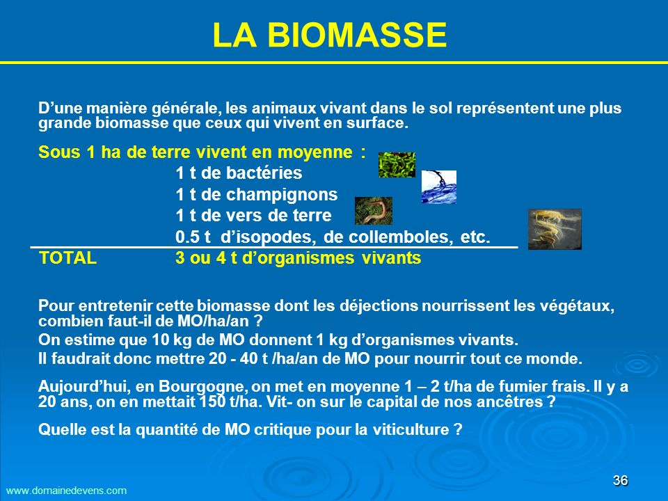 36 LA BIOMASSE Dune manière générale, les animaux vivant dans le sol représentent une plus grande biomasse que ceux qui vivent en surface.