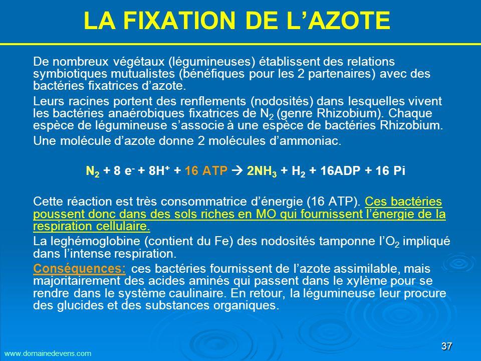 37 LA FIXATION DE LAZOTE De nombreux végétaux (légumineuses) établissent des relations symbiotiques mutualistes (bénéfiques pour les 2 partenaires) avec des bactéries fixatrices dazote.