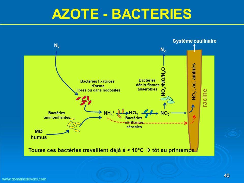 40 AZOTE - BACTERIES NH 4 + NO 3 - MO humus N2N2 Bactéries ammonifiantes Bactéries fixatrices dazote libres ou dans nodosités Bactéries nitrifiantes aérobies N2N2 NO 3 -, ac.