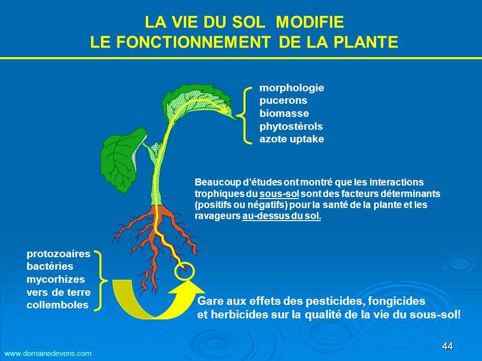 44 LA VIE DU SOL MODIFIE LE FONCTIONNEMENT DE LA PLANTE protozoaires bactéries mycorhizes vers de terre collemboles morphologie pucerons biomasse phytostérols azote uptake Beaucoup détudes ont montré que les interactions trophiques du sous-sol sont des facteurs déterminants (positifs ou négatifs) pour la santé de la plante et les ravageurs au-dessus du sol.