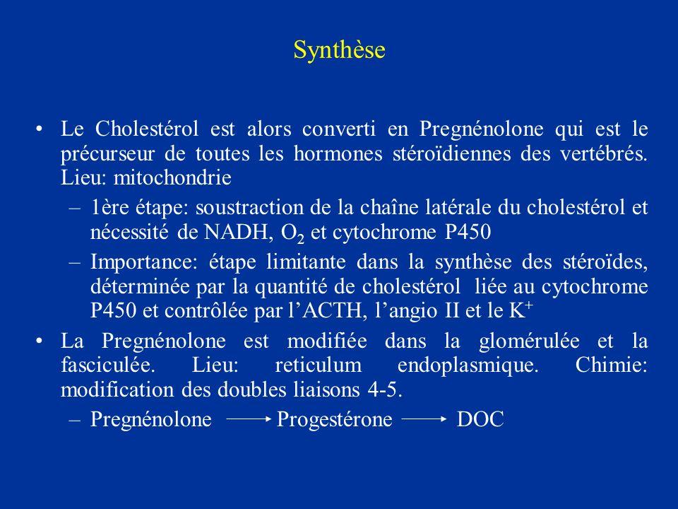 Synthèse Le Cholestérol est alors converti en Pregnénolone qui est le précurseur de toutes les hormones stéroïdiennes des vertébrés. Lieu: mitochondri