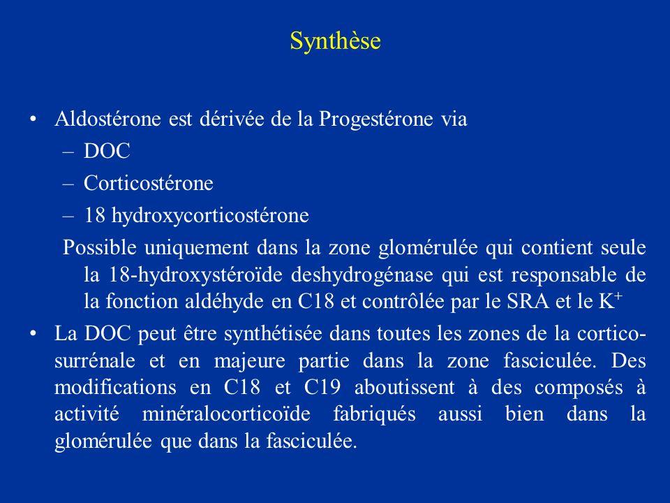 Synthèse Aldostérone est dérivée de la Progestérone via –DOC –Corticostérone –18 hydroxycorticostérone Possible uniquement dans la zone glomérulée qui