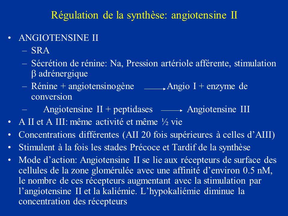 Régulation de la synthèse: angiotensine II ANGIOTENSINE II –SRA –Sécrétion de rénine: Na, Pression artériole afférente, stimulation adrénergique –Réni