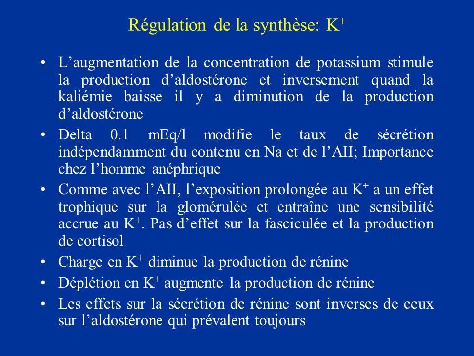 Régulation de la synthèse: K + Laugmentation de la concentration de potassium stimule la production daldostérone et inversement quand la kaliémie bais