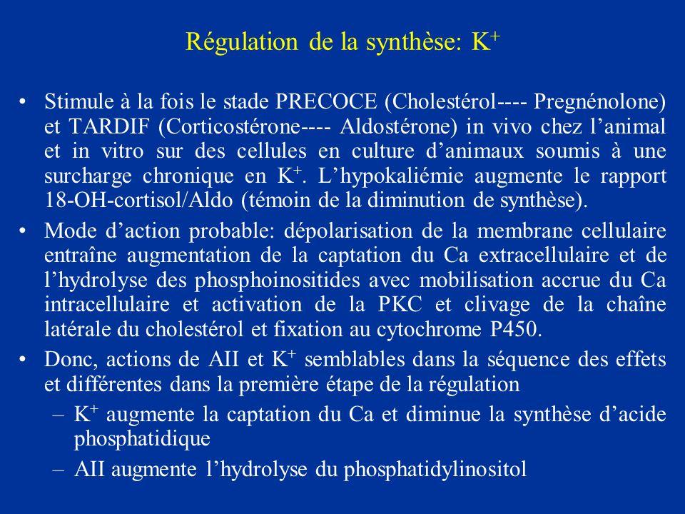 Régulation de la synthèse: K + Stimule à la fois le stade PRECOCE (Cholestérol---- Pregnénolone) et TARDIF (Corticostérone---- Aldostérone) in vivo ch