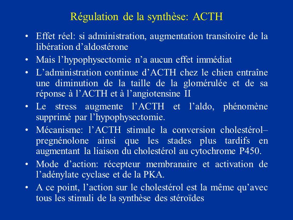 Régulation de la synthèse: ACTH Effet réel: si administration, augmentation transitoire de la libération daldostérone Mais lhypophysectomie na aucun e